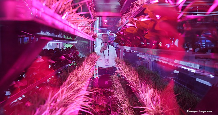 Vertical farming was demonstrated at the 2019 International Consumer Electronics Show Asia in Shanghai in June.